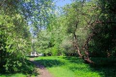 Caminhada no parque na mola Dia ensolarado morno as árvores florescem belamente foto de stock