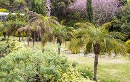 Caminhada nos jardins de vitória de La Orotava Fotos de Stock Royalty Free