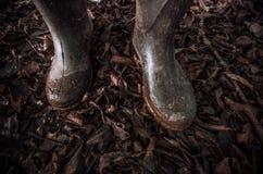 Caminhada pelas madeiras fotografia de stock royalty free