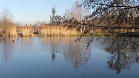 Caminhada pelo lago filme