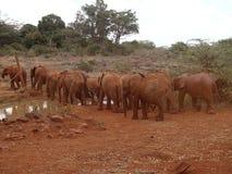 Caminhada pequena do elefante em uma coluna Imagens de Stock