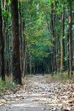 Caminhada solitário Foto de Stock