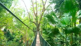 Caminhada superior da árvore, jardim de Mae Fah Luang, Doi Tung, Chiang Rai, Tailândia video estoque
