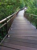 Caminhada superior da natureza da árvore Fotos de Stock Royalty Free