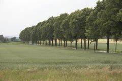 Caminhada Tree-lined Fotografia de Stock
