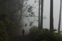 Caminhadas da estatueta a outro no trajeto enevoado que têm após a árvore caída na parede do caldera de Sete Cidades fotografia de stock