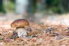 Caminhadas da floresta Fotografia de Stock Royalty Free