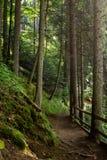 Caminhadas da manhã Imagem de Stock Royalty Free