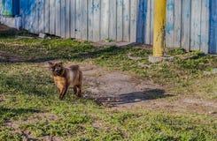 Caminhadas de gato ao longo da rua apenas Fotografia de Stock