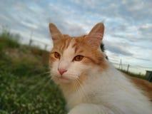 Caminhadas de gato bonitas na natureza imagem de stock royalty free