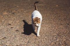 Caminhadas de gato desabrigadas da rua nas ruas de Chipre foto de stock