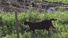 Caminhadas de gato em torno da exploração agrícola vídeos de arquivo