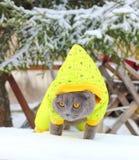 Caminhadas de gato na neve Imagem de Stock