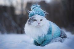 Caminhadas de gato peludos através dos montes de neve no inverno fotos de stock