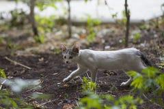 Caminhadas de gato pequenas da rua do bebê na grama imagens de stock royalty free