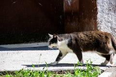 Caminhadas de gato preto no passeio entre a grama verde foto de stock
