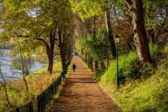 Caminhadas do outono fotos de stock
