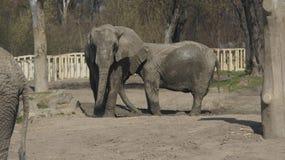 Caminhadas dos elefantes Fotos de Stock Royalty Free