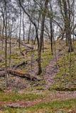 Caminhando as madeiras do nordeste de Iowa ao fim de outubro foto de stock