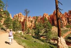 Caminhando Bryce Canyon EUA Imagem de Stock