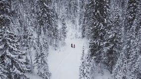 Caminhando caminhadas do homem através da neve profunda no inverno Forest Aerial View Voo do zangão sobre a floresta de passeio d vídeos de arquivo