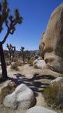 Caminhando Joshua Tree National Park imagens de stock
