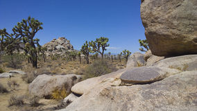 Caminhando Joshua Tree National Park Foto de Stock Royalty Free