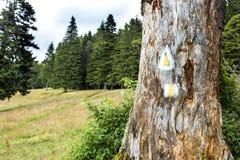 Caminhando marcas em uma árvore fotos de stock