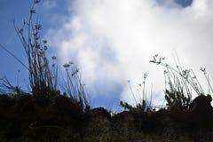 Caminhando na serra parque natural do de Grazalema, província de Cadiz, a Andaluzia, Espanha, para Benamahoma fotografia de stock