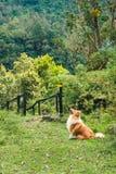 Caminhando o cão em Colômbia fotografia de stock royalty free