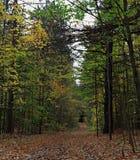 Caminhando o trajeto com folhas caídas fotografia de stock