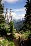Caminhando o trajeto para montar Rainer, Washington, EUA Fotografia de Stock
