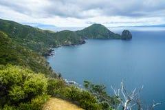 Caminhando a passagem litoral de Coromandel, Nova Zelândia 7 fotografia de stock royalty free