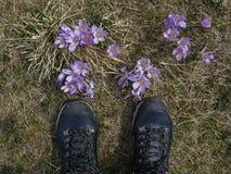 Caminhando sapatas e açafrões na clareira da montanha Foto de Stock