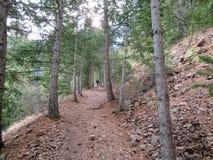 Caminhando uma fuga da floresta na região selvagem Imagens de Stock
