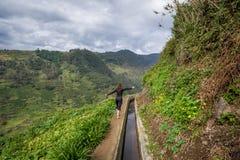 Caminhante da mulher na montanha da nova de Levada que caminha o trajeto, Madeira Imagens de Stock