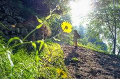 Caminhante da mulher na natureza Foto de Stock