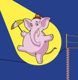 Caminhante do tightrope de Elepahnt Foto de Stock
