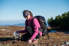 Caminhante fêmea que recolhe ervas um o dia ensolarado nas montanhas Imagem de Stock Royalty Free