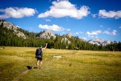 Caminhante masculino com seu punho acima do passeio no campo bonito verde foto de stock royalty free