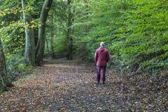 Caminhante no trajeto da floresta em Daisy Nook Country Park fotos de stock