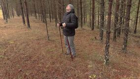 Caminhante que anda na floresta do pinho video estoque