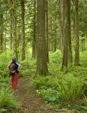 Caminhante que pausa ao longo de um trajeto de floresta Fotos de Stock Royalty Free