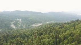 Caminhantes com as trouxas que estão sobre a montanha na opinião aérea da floresta verde video estoque