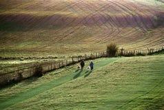 Caminhantes com cães Foto de Stock Royalty Free