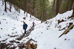 Caminhantes da família que andam através da floresta do pinho no inverno Fotografia de Stock Royalty Free