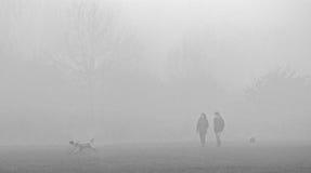 Caminhantes do cão de Misty Morning Foto de Stock Royalty Free