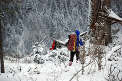 Caminhantes em montanhas de Carpathians do inverno ucrânia Imagens de Stock Royalty Free