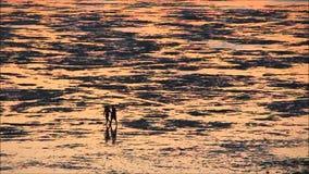 Caminhantes mostrados em silhueta da praia na maré baixa video estoque
