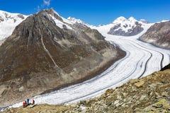 Caminhantes que veem a grande geleira de Aletsch imagem de stock